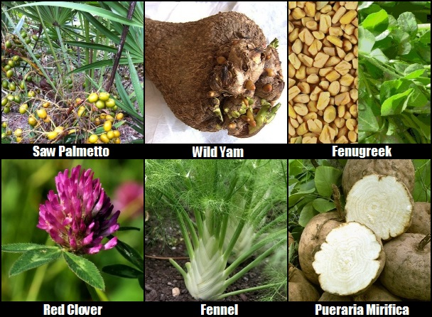 Herbs That Increase Breast Size | Natural Breast Enhancement